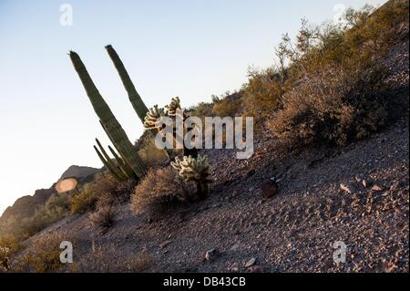 June 13, 2013 - Lukeville, Arizona, United States - Tire tracks through the desert floor in Organ Pipe National - Stock Photo