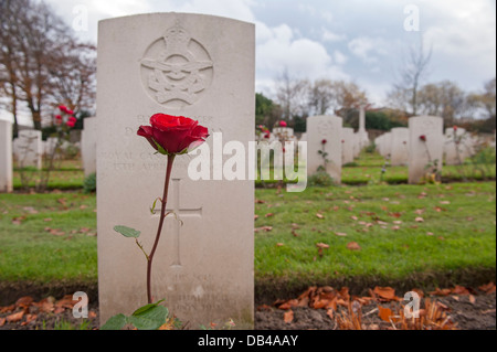 Single red rose growing in front of headstone, other memorials beyond - Commonwealth war graves at Stonefall Cemetery, - Stock Photo