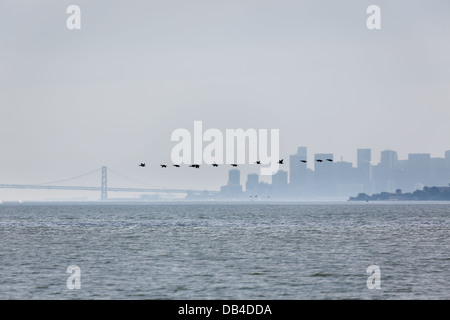 Line of a dozen birds flying above water of San Francisco Bay with city skyline in background on a foggy morning - Stock Photo