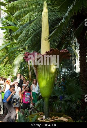 People viewing the rare Corpse flower (Titan Arum) at the US Botanic Garden in Washington, DC - Stock Photo