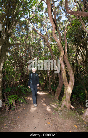 Tourist walking in Laurel Cloud Forest of Anaga Mountains, Tenerife, Canary Islands, Spain - Stock Photo