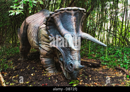 Triceratops (which means 'three horned face') dinosaur from the late Cretaceous period. - Stock Photo
