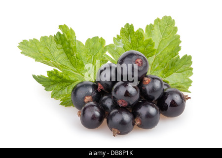 black currant heap leaves on white background - Stock Photo