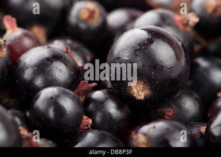 black currant macro closeup shiny ripe - Stock Photo