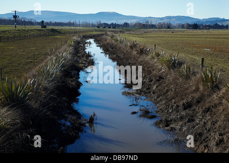 Drainage channel and planted riparian strip, Taieri Plains, near Dunedin, South Island, New Zealand - Stock Photo