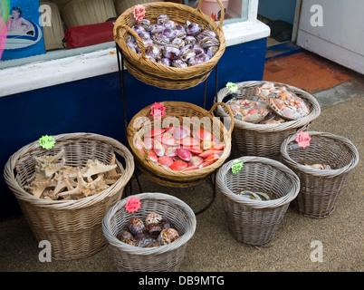 Seaside shells for sale in wicker baskets Cromer Norfolk England - Stock Photo