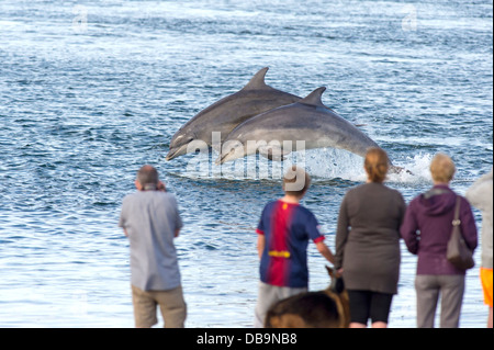 People watching common bottle nosed dolphins breaching, Chanonry Point, Moray firth, Scotland, UK - Stock Photo
