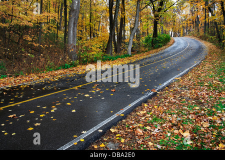 A Curving Blacktop Road Through A Lush Forested Park On A Rainy Autumn Day, Sharon Woods, Southwestern Ohio, USA - Stock Photo