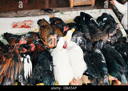 live chickens and ducks on sale at a market in Vietnam - Stock Photo