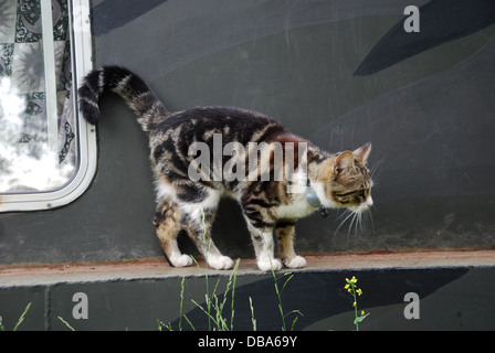 cat on narrowboat on the Oxford canal, Oxfordshire United Kingdom - Stock Photo