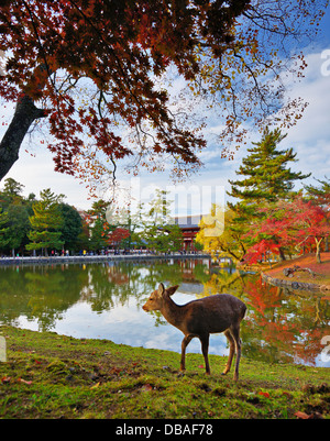 Deer at Todai-ji Temple grounds in Nara, Japan. - Stock Photo