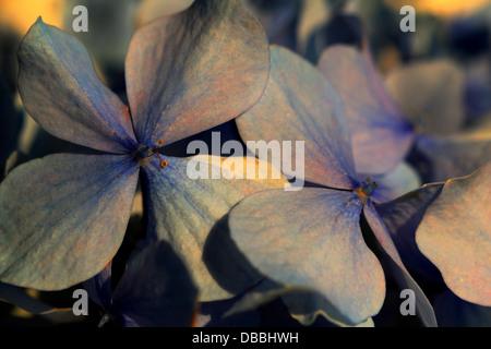 Purple, leaves, flower, beautiful, perfect, precious, macro, sunset, modern, love, vintage, vibrant, vigorous, - Stock Photo