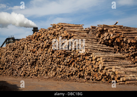 Scottish Tree Logging _Emissions from Bioenergy Norbord processing plant Inverness - Morayhill, Dalcross, Invernessshire, - Stock Photo