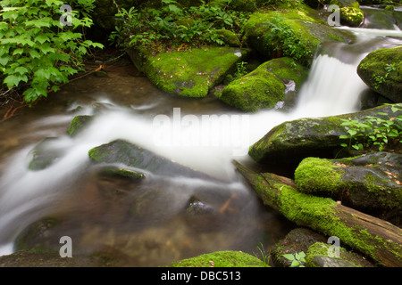 Roaring Forks Motor Trail in the Great Smoky Mountains National Park. - Stock Photo