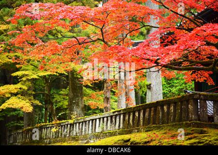 Autumn foliage in Nikko, Japan. - Stock Photo
