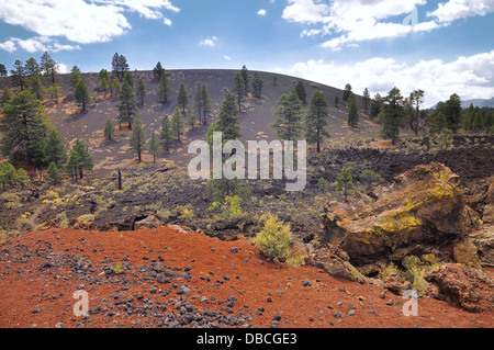 Pine trees at Sunset Crater volcano in Flagstaff - Stock Photo