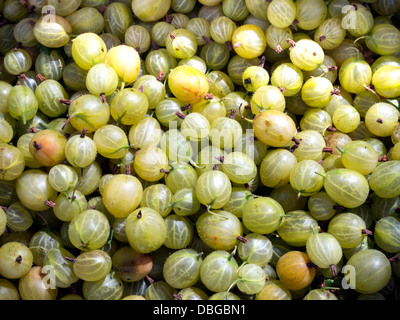 Green gooseberry as a background - Stock Photo