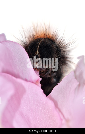 aterpillar - Stock Photo