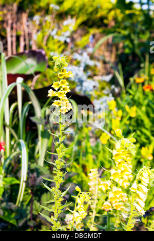 Typical english garden plants flowers hostas planted in for Typical landscaping plants
