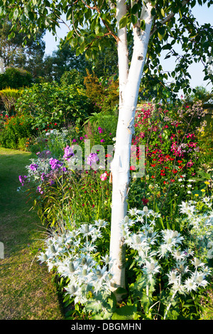 Typical english garden plants flowers the sunflower for Typical landscaping plants
