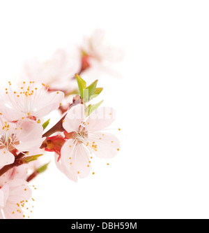 Beautiful Blossoms Border - Stock Photo