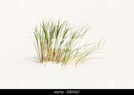 Some blades of grass growing on a sand dune at the North Sea in Norderney, Germany. - Stock Photo