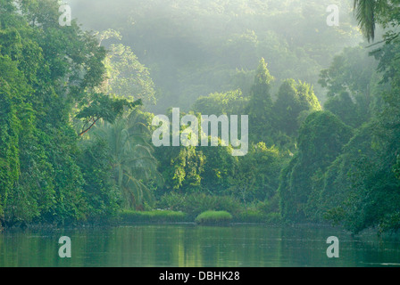 Primary rainforest in Corcovado National Park, Costa Rica - Stock Photo
