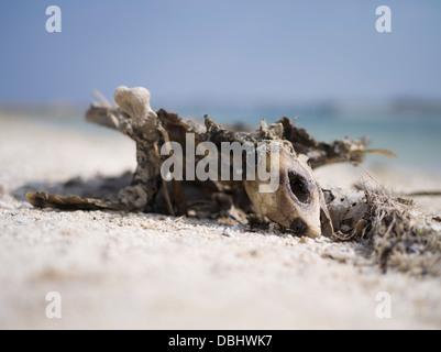 Turtle skeleton on the beach, Kume Island, Okinawa, Japan - Stock Photo