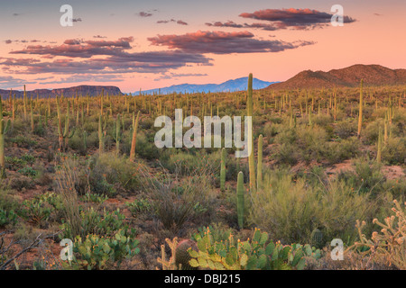 Saguaro National Park from Signal Hill, Arizona, USA - Stock Photo