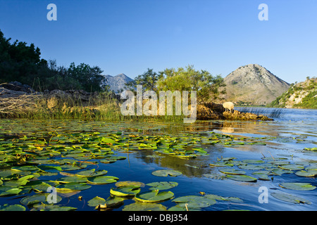 Skadar lake.The Montenegrin part of the lake, at a size of 40000 hectares, was declared a National Park in 1983. - Stock Photo