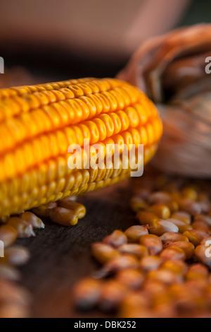 Corn Cob, Close-up, Croatia, Slavonia, Europe - Stock Photo