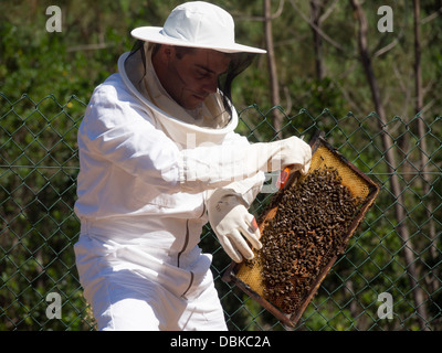 Beekeeper in protective suit holding brood frame from bee hive - Stock Photo