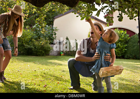 Parents and daughter picking apples together in garden, Munich, Bavaria, Germany - Stock Photo