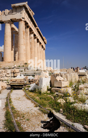 Feral cat basking in the sun outside the Acropolis. Athens - Stock Photo