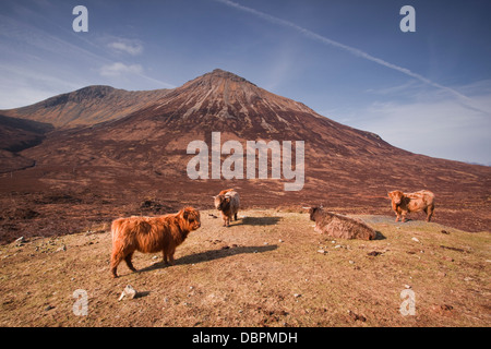 Highland cattle on the Isle of Skye in the Highlands, Inner Hebrides, Scotland, United Kingdom, Europe - Stock Photo