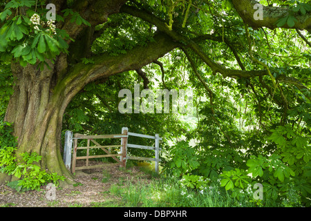 An old gateway beside the River Thames on the Thames Path framed by an ancient Horse Chestnut tree, Dorchester-on - Stock Photo