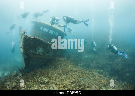 Scuba divers encircling the wreck of the Mr. Bud, a former shrimping boat, scuttled off the island of Roatan, Honduras - Stock Photo