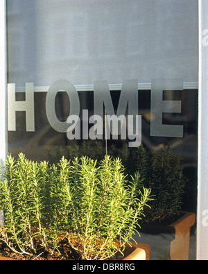 Close-up of rosemary in window box in front of window with engraved 'Home' motif - Stock Photo