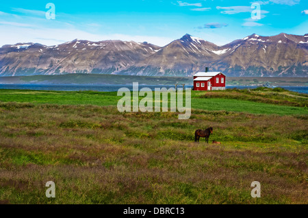 Iceland red house in the meadow with a horse, mountain background - Stock Photo