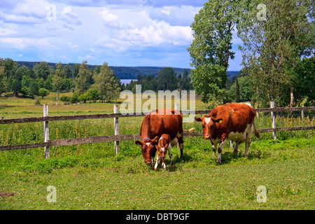 View of cow on pasture - Stock Photo