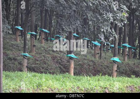 A rubber plantation - Stock Photo