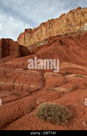 Small bush in the wash near a sandstone butte, Capitol Reef National Park, Utah, United States of America, North - Stock Photo