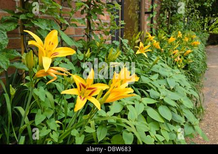 Day lily (Hemerocallis Bonanza) - Stock Photo