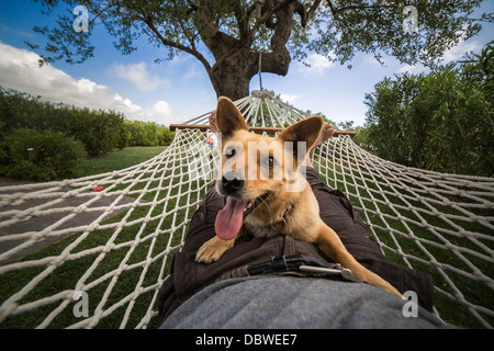 Man and dog relaxing on the hammock - Stock Photo