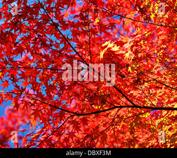 Fall foliage leaves and branches - Stock Photo
