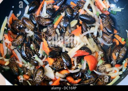 unusual insect dishes, Blattodea, Blaberus giganteus ...