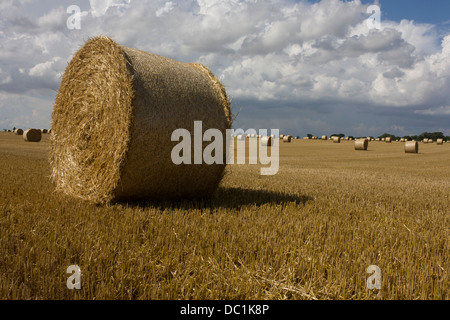 Large round bales of hay drying in summer sun after the harvest near Reedham, a small village on the Norfolk Broads. - Stock Photo