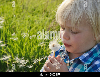 Boy blowing dandelion clock, close up - Stock Photo
