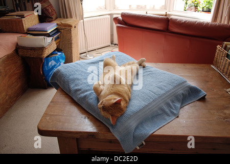 Comfy luxurious ginger house cat sleeping - Stock Photo