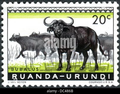 RWANDA - URUNDI - CIRCA 1959: Postage stamp printed in Rwanda - Urundi, shows African buffalo, circa 1959 - Stock Photo